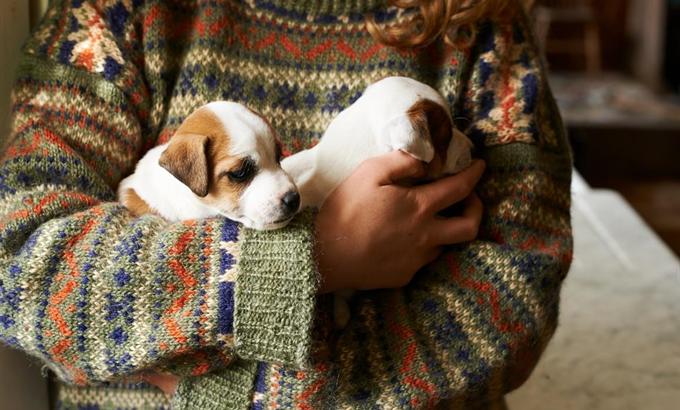 Az Új Kutyád weboldal segít gazdit találni a kutyáknak
