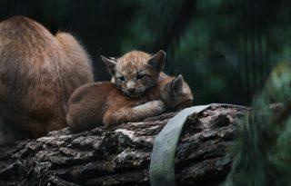 Példátlan testvéri szeretet egy orosz állatkertben