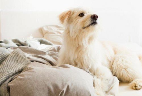 Egy friss kutatás szerint jobban aludhatsz, ha a kutyád is melletted pihen