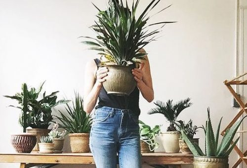 Ezek a növények segítenek legyőzni a náthát – a NASA szerint