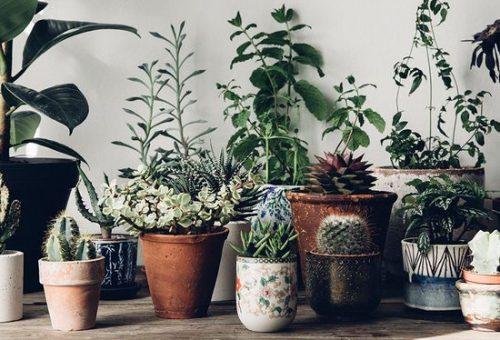 Növények és egy jó pasi az új kedvenc Insta-oldaladon