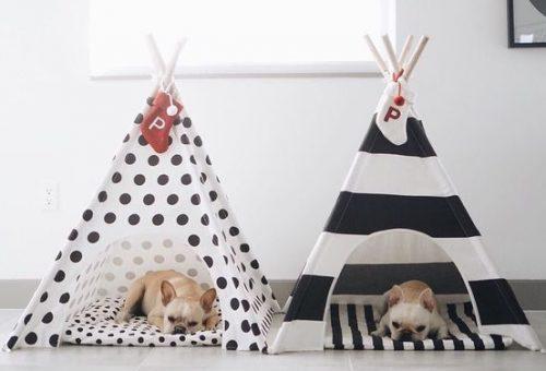 6 karácsonyi ajándék, amivel meglepheted a kutyádat
