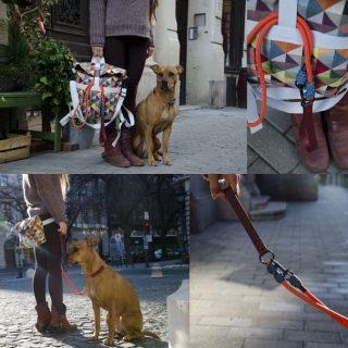 Kutyatulajdonosok kedvenc táskája