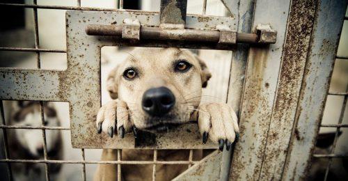 """""""Ha verik a kutyát, hogyan várhatnánk el, hogy ne legyen családon belüli erőszak?"""""""