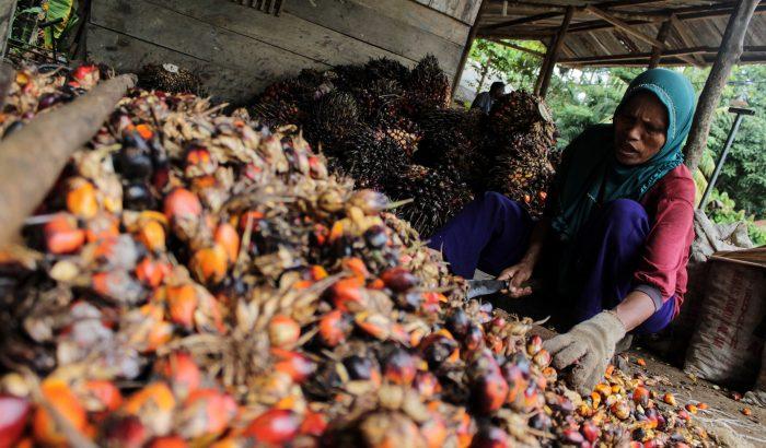 ÖKO: 3 élelmiszer, amely megdobja az ökolábnyomunkat