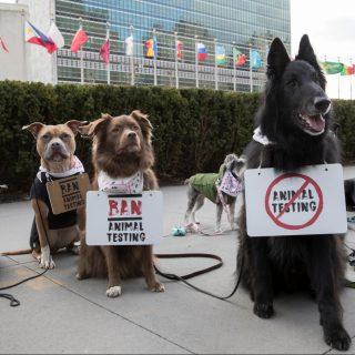 A világ első kutyademonstrációjánál hitelesebben még nem szólaltak fel az állati jogokért