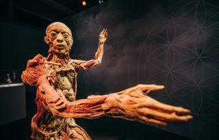 Kitárulkozik az emberi test a Budapestre érkező BODY kiállításon