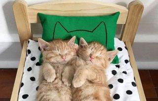 Cicaikrek egy ágyban