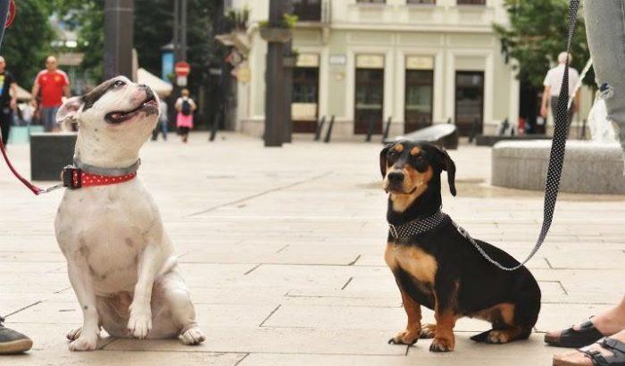 """""""Aranyos a kutyád, csak veled vannak gondok"""""""