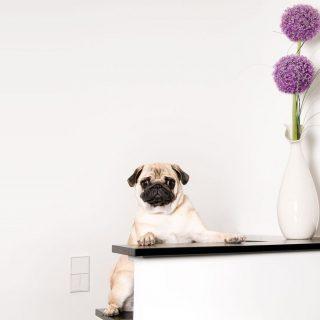 Ezek az Instagram legnépszerűbb kutyafajtái