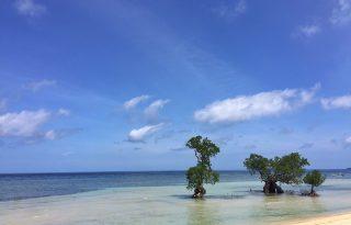 Virágom, világom: jöhet egy újabb sziget