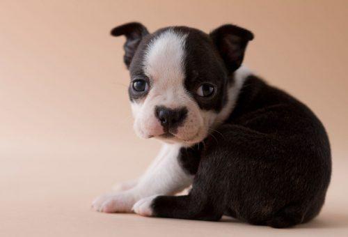 Ha randizni akarsz, először fogadj örökbe egy kutyát