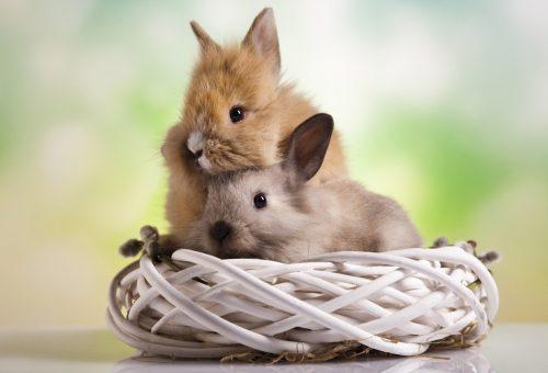 Út szélére kerülnek a megunt húsvéti nyuszik