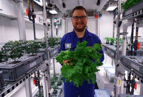 Föld és napfény nélkül termesztettek zöldséget az Antarktiszon