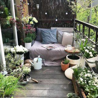 Így csinálj egy darabka Paradicsomot az erkélyedből