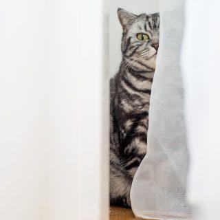 Macskák és férfi alattvalóik
