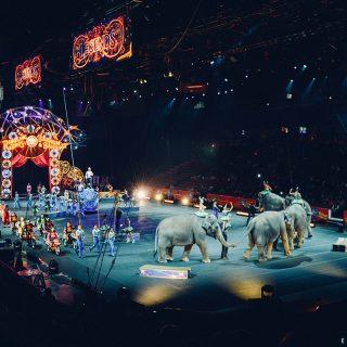 Cirkuszolj a CIRKEUROPA fesztiválon