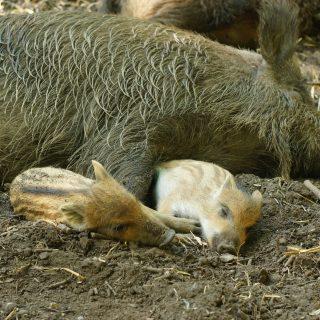 Gyere velem vidékre: állatkölykök a Budakeszi Vadasparkban