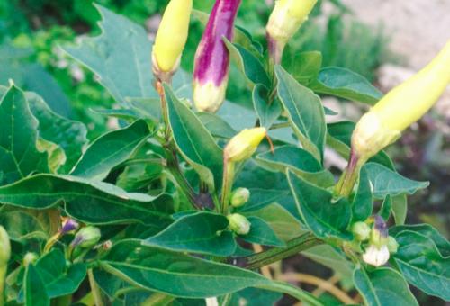 10 jó ok a saját zöldség termesztésére