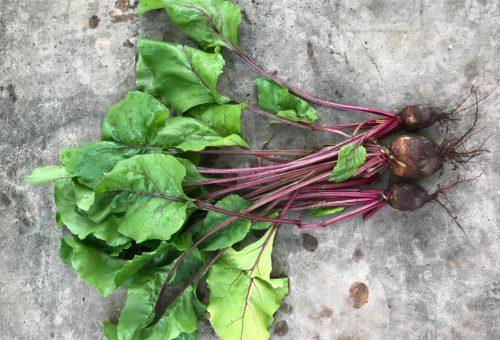 Top 10 zöldség a teraszra