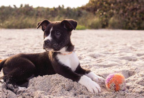 Így figyelj oda a kutyádra a nyári forróságban