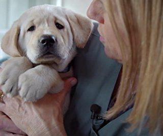 Az év legcukibb dokumentumfilmjében a kutyáké a főszerep