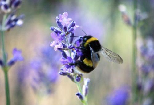 Egy perc alatt megmenthetünk egy szorgos méhet