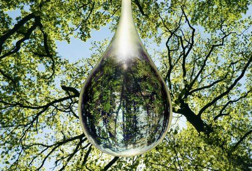 Szépségkoncentrátumok forradalma a környezetszennyezés ellen az Yves Rocher-nál