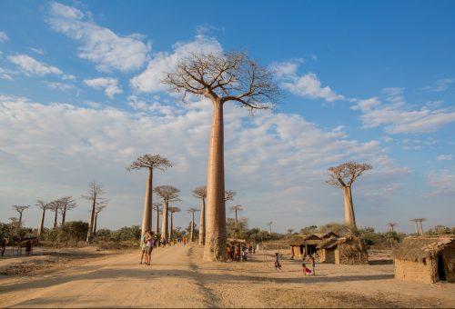 A majomkenyérfák útján – Madagaszkár