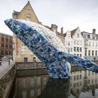 Igazi szemét ez a bálna!