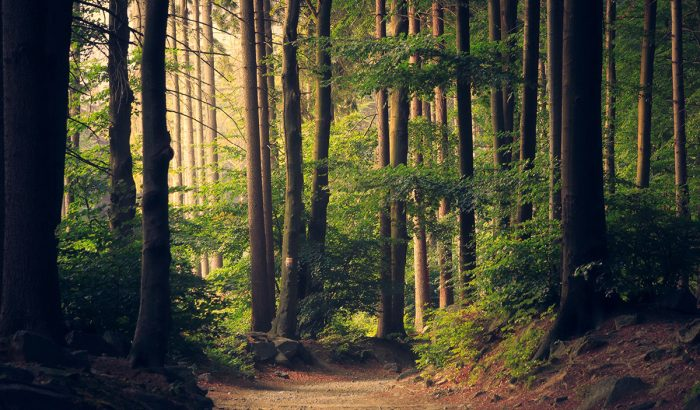 """Mindent az """"erdőfürdőzésről"""", a legújabb wellness-trendről"""