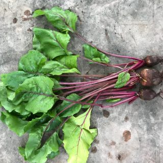 Gondolj a télre! – 10 zöldség nyári vetése őszi/téli szürettel