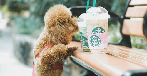 A Starbucks lemond a szívószálakról a környezettudatosság jegyében