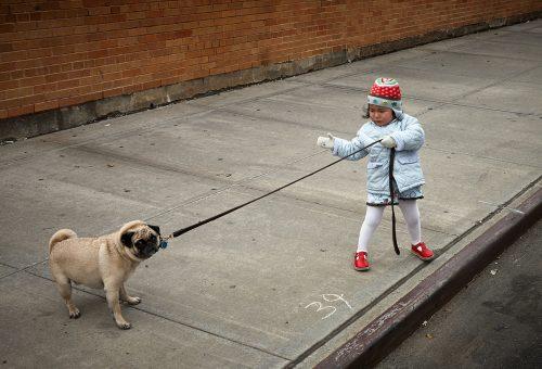 Nemcsak a kutyád, az egészséged is hálás lesz a sétáért