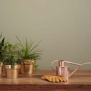 Génmanipulált növénnyel tisztíthatjuk a lakás levegőjét
