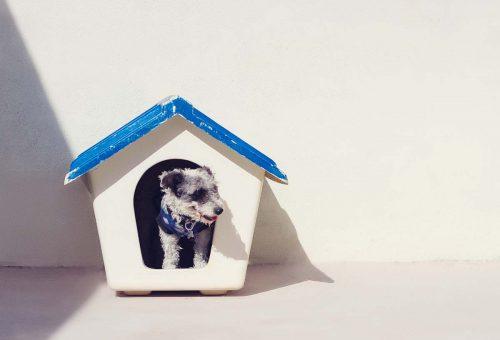 Kutyatartásból élen járunk, de a megfelelő gondoskodást még tanulnunk kell
