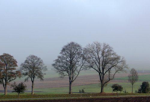 Gyorsabban nőnek a fák, de a kalóriaértékük kisebb a globális felmelegedés miatt