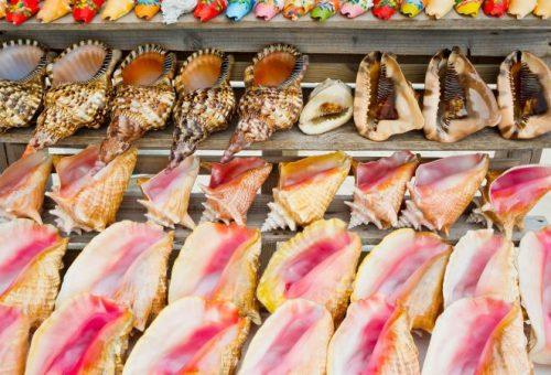 Állatkínzáshoz járulsz hozzá, ha kagylóhéjat veszel