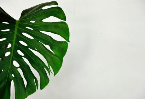 3 növény, ami tökéletes lesz a fürdőszobádba