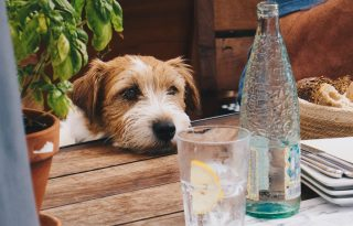 Ennyi vizet kell innod, ha fogyni szeretnél