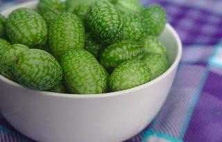 Furcsa gyümölcs, mesébe illő névvel: ilyen a mexikói egérdinnye