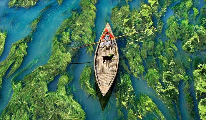 Buja algatengerben csónakázó kecske