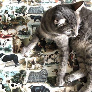 Kutyák a dizájnos magyar csomagolópapíron