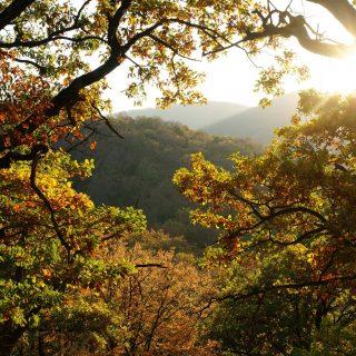 Gyere velem vidékre: őszi levélhullás a Börzsönyben