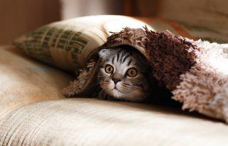 A macskád azt hiszi, te is egy nagy, béna macska vagy