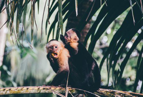 Világszerte betiltanák az állatkísérleteket