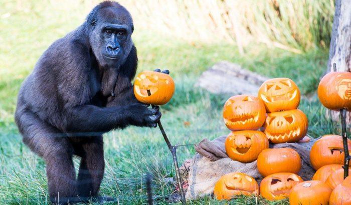 Halloween-i fotózás a londoni állatkertben