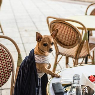 Kedvenc helyünk a héten: Gerlóczy Kávéház