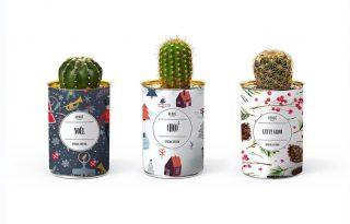 Dizájnos kaktuszok a vidám otthonért