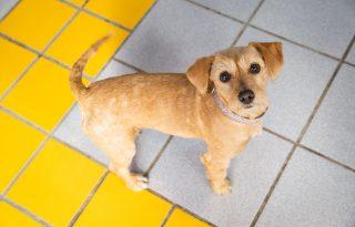 Önkiszolgáló kutyamosók Budapesten